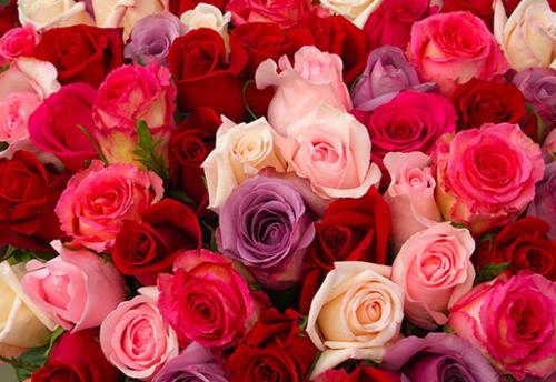 interior exterior design princess roses