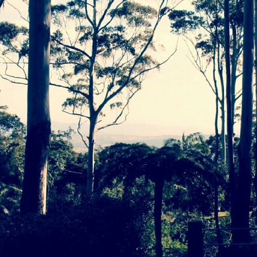 Mt Tamborine View